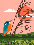 Kingfisher art prints Pink
